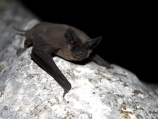 Mercury bioaccumulation in bats reflects dietary connectivity to aquatic food webs